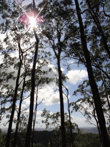 20160121-Australia-Gold Coast-Rainforest Tours-3