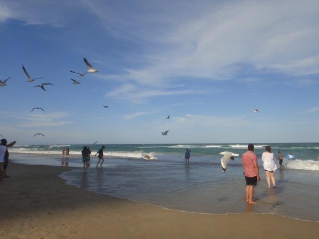 20160121-Australia-Gold Coast-Surfers Paradise-8